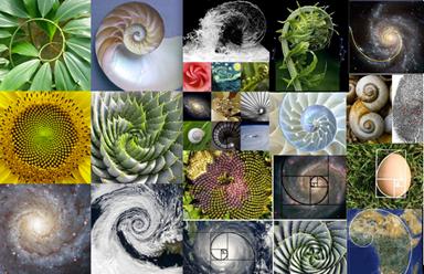 Shells for Logo